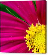 Plink Flower Closeup Canvas Print