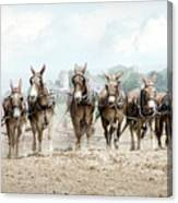 Plowing The Fields Canvas Print