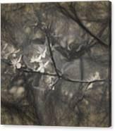 Plum blossom impression Canvas Print