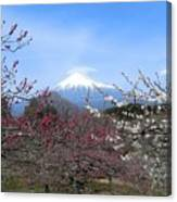 Plum Blossom's At Iwamoto Japan Canvas Print
