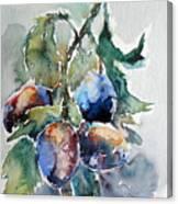 Plum Canvas Print