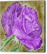Plum Passion Rose Canvas Print