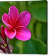 Plumeria - Royal Hawaiian Canvas Print