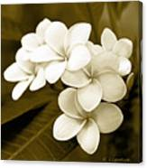 Plumeria - Brown Tones Canvas Print