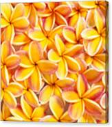 Plumeria Flowers Canvas Print