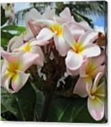 Plumeria In Pink 3 Canvas Print
