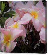 Plumeria In Pink 4 Canvas Print