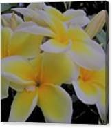 Plumeria In Yellow 4 Canvas Print