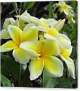 Plumeria In Yellow  5 Canvas Print