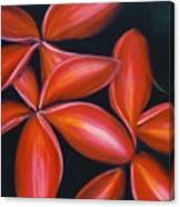 Plumeria Rouge Canvas Print