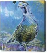 Plump Nevada Quail Canvas Print