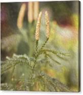 Poconos 7933 Canvas Print
