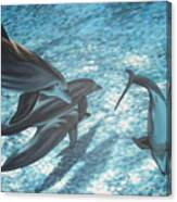 Pod Of Dolphins Canvas Print