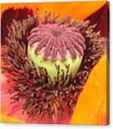 Pod Poppy Canvas Print