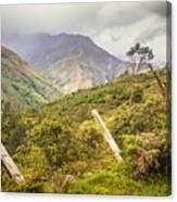 Podocarpus National Park Canvas Print