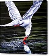 Poetic Motion Canvas Print
