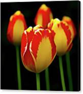 Poetically Tulip Canvas Print