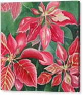 Poinsettia Magic Canvas Print