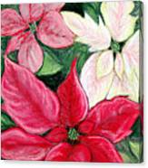 Poinsettia Pastel Canvas Print