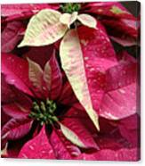 Poinsettias -  Painted And Speckled Canvas Print