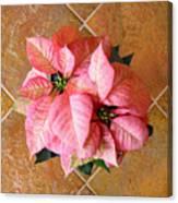 Poinsettias -  Pinks On Tile Too Canvas Print
