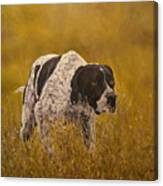 Pointer...to The Point....... Canvas Print