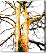Pointillised Tree Canvas Print