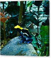 Poison Dart Frog Poised For Leap Canvas Print
