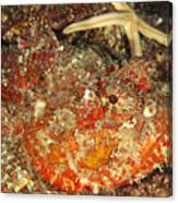 Poisonous Stone Fish, Scorpaena Mystes Canvas Print