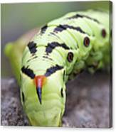 Pokemon In Real Caterpie Canvas Print