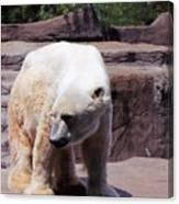 Polar Bear 2 Canvas Print