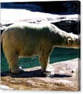 Polar Bear 3 Canvas Print