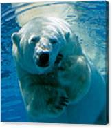 Polar Bear Contemplating Dinner Canvas Print