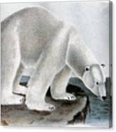 Polar Bear (ursus Maritimus) Canvas Print