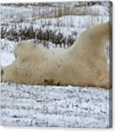 Polar Bear Yoga Canvas Print