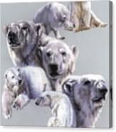 Arctic King Canvas Print