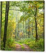 Polish Forest 2 Canvas Print