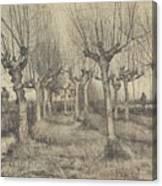 Pollard Birches Nuenen  March 1884 Vincent Van Gogh 1853  1890 Canvas Print