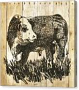 Polled Hereford Bull 11 Canvas Print