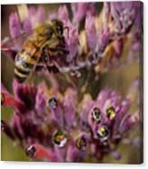 Pollen Bees Canvas Print