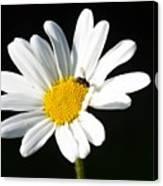 Pollen Collection Canvas Print