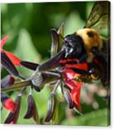 Pollen Covered Bee Canvas Print