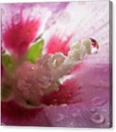 Pollen Droplet Canvas Print