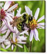 Pollen Gathering Canvas Print