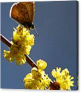 Pollen Pickup Canvas Print