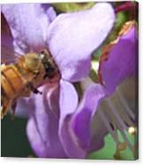 Pollinating 5 Canvas Print