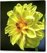 Pollinating Canvas Print