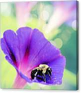 Pollinating The Glories Canvas Print