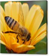 Pollination 2 Canvas Print