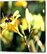 Pollination 2 Canvas Print